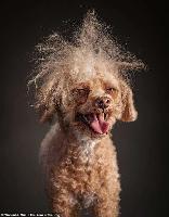 Очаровательные портреты собак